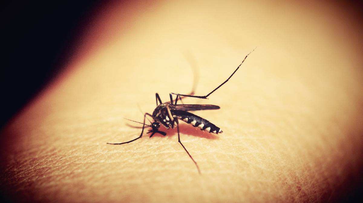 Hunter New England Health is warning that this summer could be a bit of a shocker for mozzies.